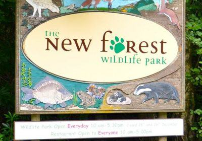 New Forest Wildlife Park